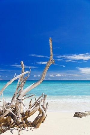 Tropical sandy beach with old dry wooden branch photo