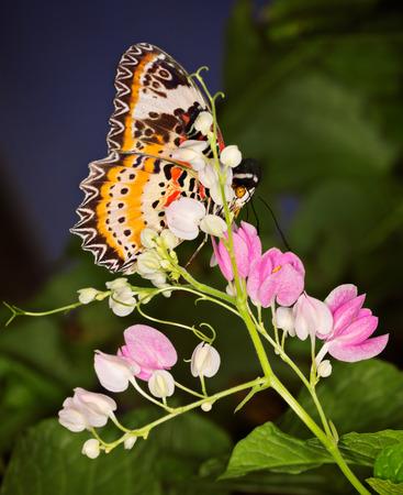 mariposas volando: Mariposa de monarca en pequeñas floweers rosa, Danaus plexippus