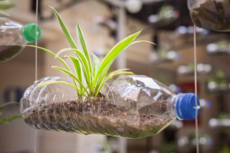 Lege plastic fles gebruikt als een container voor het kweken van planten, recycling groene concept