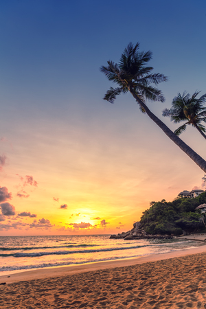 Sunset under the coconut palm trees on the beach. Vertical composition