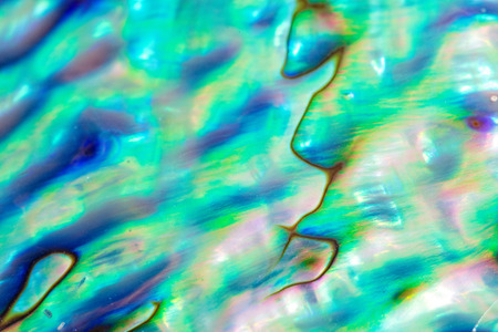 Close up multicolour texture background of paua shell, haliotis iris or Abalone shell