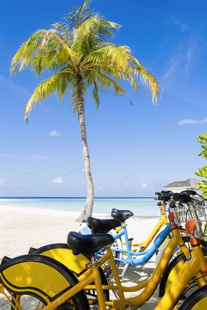 Group of Bicycles on the tropical sandy beach by a palm tree with sky and calm sea at background, vertical composition