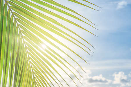 Coconut palm trees over  bright sky with shining sun glow
