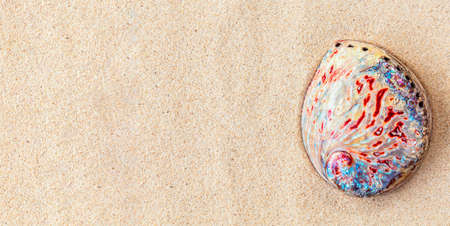 Top view of colourful abalone seashell on white clean sand, background, copy space , banner