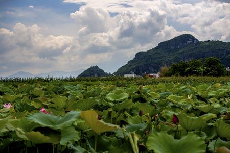 mao: Mao Tong scenery