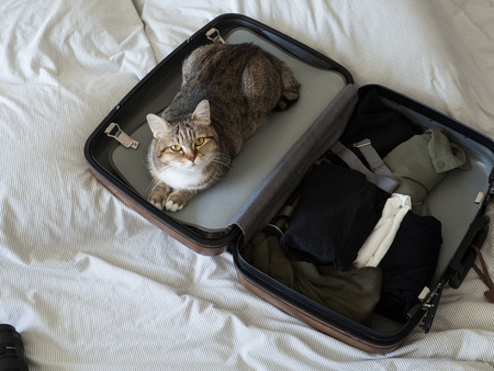 pet cat ready to travel  sleep in suitcase with baggage on bed