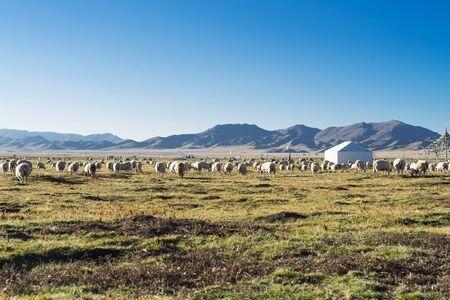 Zoige Grassland, Aba Prefecture, Sichuan, China Zdjęcie Seryjne