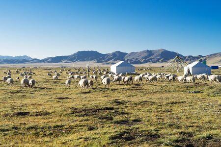 Zoige Grassland, prefektura Aba, Syczuan, Chiny