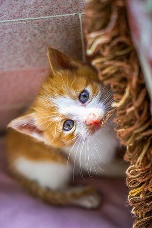 One month old little orange cat close-up Archivio Fotografico