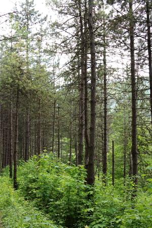 herzegovina: Woods in Jajce, Bosnia and Herzegovina Stock Photo