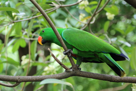 A green feathered lory perching on a tree branch, looking curiously at the surroundings