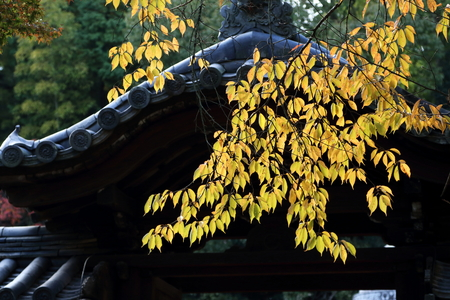 Early Autumn foliage in Japans ancient capital Nara