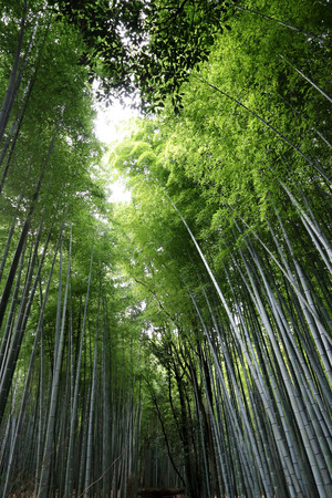 Vertical shot of Arashiyamas Bamboo grove, in Saga-Arashiyama area in Kyoto, Japan Stock Photo