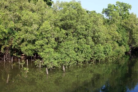 Mangrove Forest in the inter-tidal zone during high tide at Sungei Buloh Nature Reserve. Stock Photo