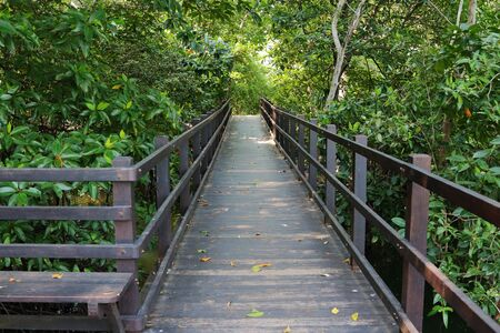 An empty  boardwalk in the Mangrove Forest area in Singapore