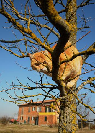 stuck up: cat on the tree