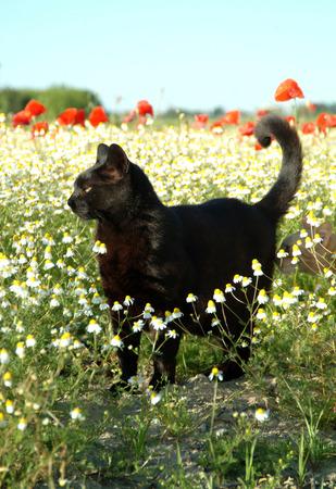 flowered: black cat in flowered field