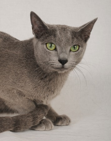 first floor: Russian Blue