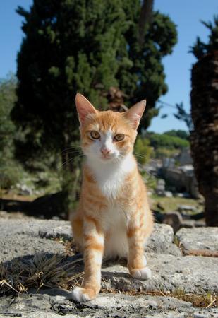 advances: Cat