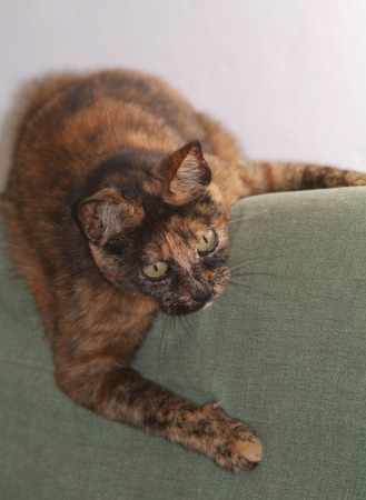 snappy: cat