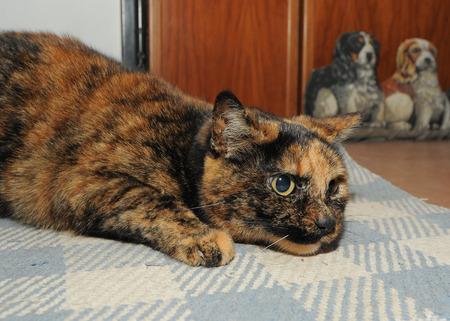 snappy: CAT.