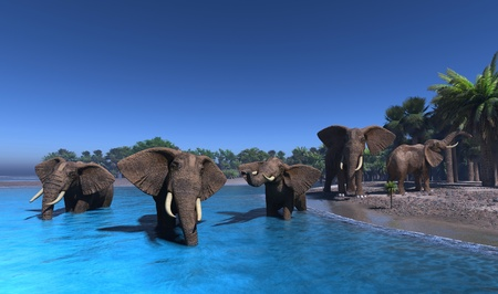 natural forces: An elephant swims through the water.