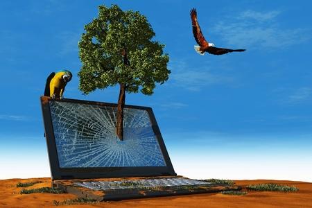 birds desert: The laptop in the desert.