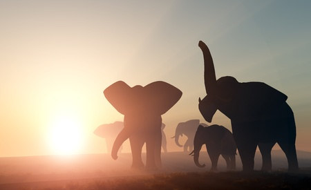 south park: Group of elephants in the wild. Stock Photo
