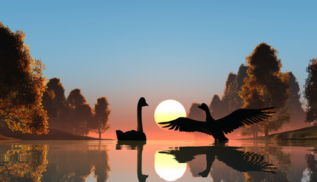 swan lake: Silhouette of the birds on the river.