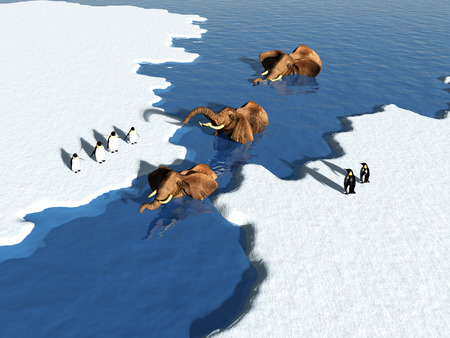 natural forces: Group of elephants swimming in the ice. Stock Photo