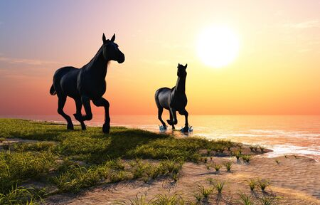 Horses drink water at sunset