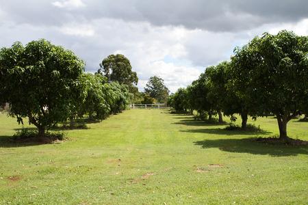 queensland: Small Mango Orchard in Queensland