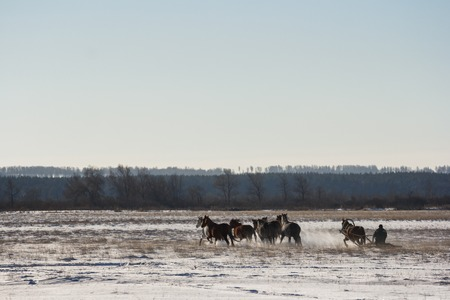 horse sleigh: The coachman on the sled across the field driving horses Stock Photo