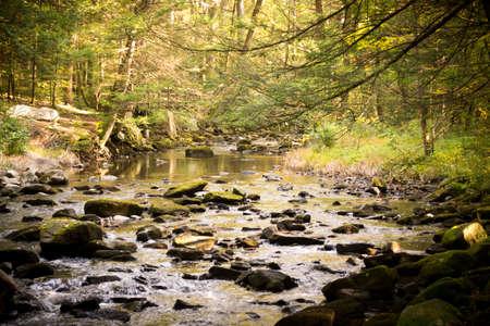 stoney: Stoney Creek