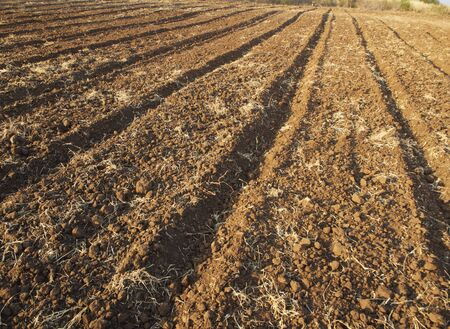 Agricultural soil plots that are prepared for sowing corn