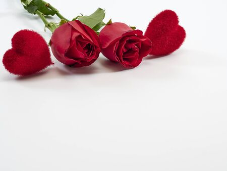 Valentine's Day background. Two red rose and hearts decorations on white background. For card design and wedding.