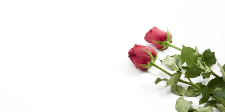 Valentine's Day background. Two red rose on white background, top view, space for text. For card design and wedding.