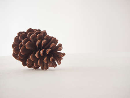 Pine cone isolated on white background. Space for text