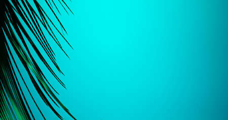 palm branch on a blue background. background texture. beautiful palm tree branch on sky background