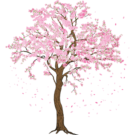 Isolated sakura spring blossom blooming tree with flowers illustration with detailed drawing bark Vettoriali