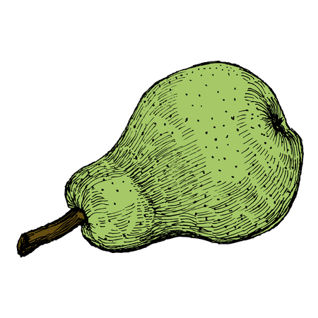 Hand drawn vintage vector illustration of isolated green pear on white background