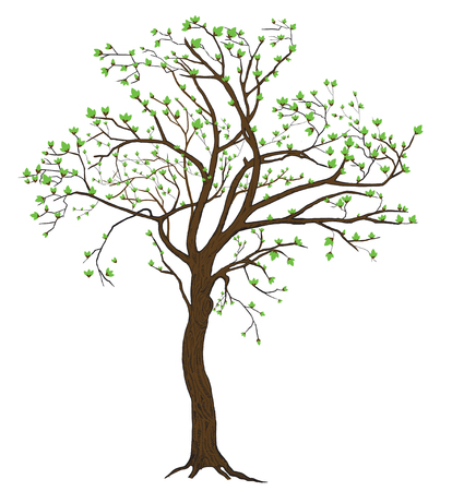 Isolated spring blooming tree illustration with detailed drawing bark for large wide-format printing
