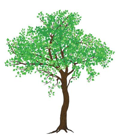 Geïsoleerde zomer groene boom illustratie met gedetailleerde tekening schors voor groot breedformaat afdrukken