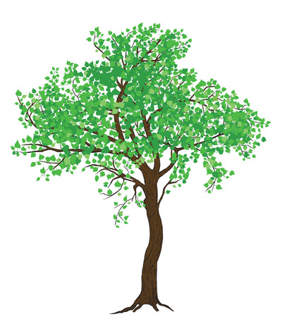 Isolated summer green tree illustration with detailed drawing bark for large wide-format printing