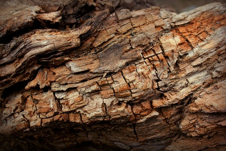 singularity: Background of a wooden surface