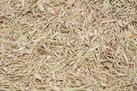 lemongrass: Drying lemongrass