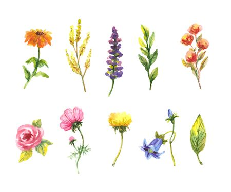 Vector floral set. Colorful floral collection with leaves and flowers, drawing watercolor. Spring or summer design for invitation, wedding 向量圖像