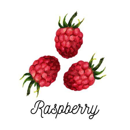 raspberry watercolor illustration vector hello summer