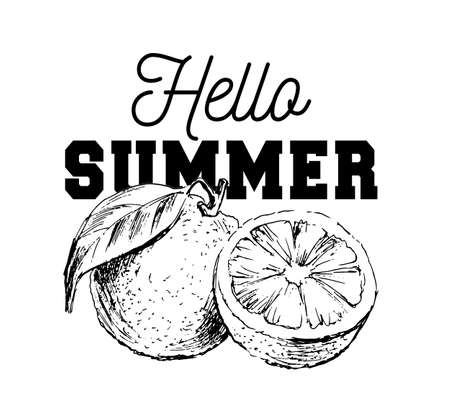Hand drawn watercolor painting on white background. Vector illustration of fruit orange slogan Hello Summer
