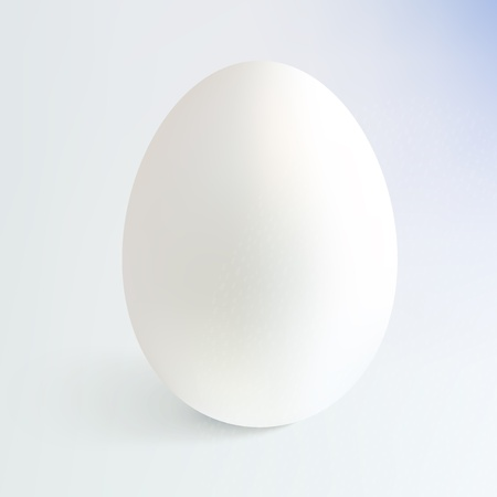 egg yolk: White  realistic egg with shadow Illustration